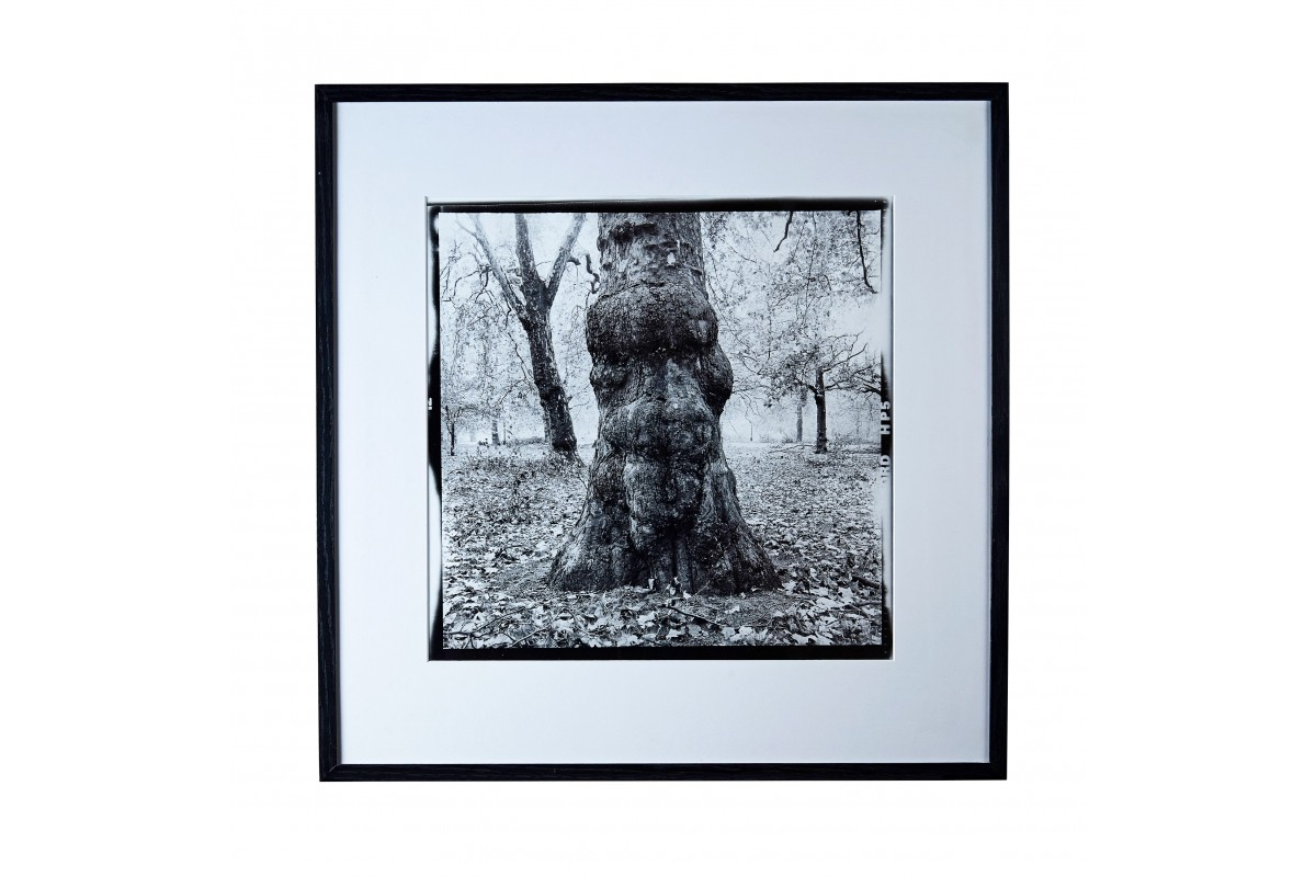 Photo « L'arbre fou -...